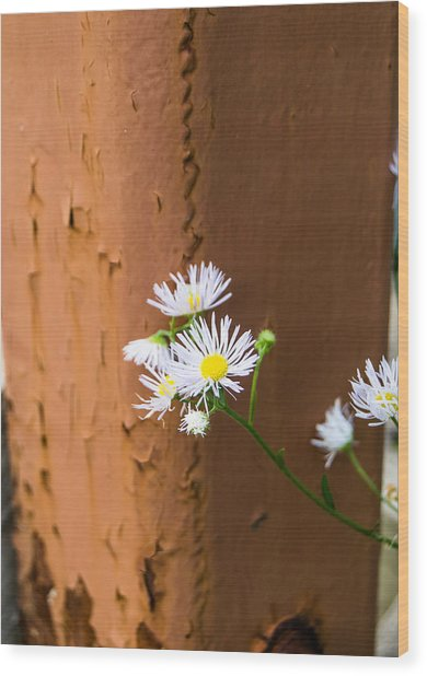 Daisy And Rust Wood Print