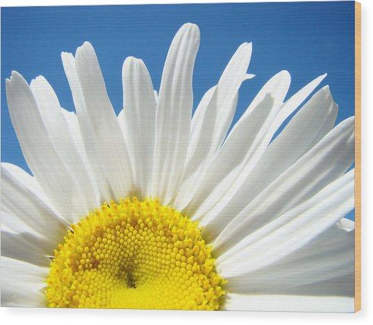 Daisy Art Prints White Daisies Flowers Blue Sky Wood Print