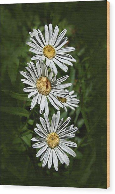 Daisy Chain Wood Print