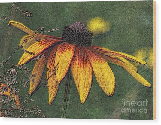 Daisy Wood Print by Diane E Berry