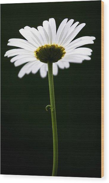 Daisy Down Under Wood Print