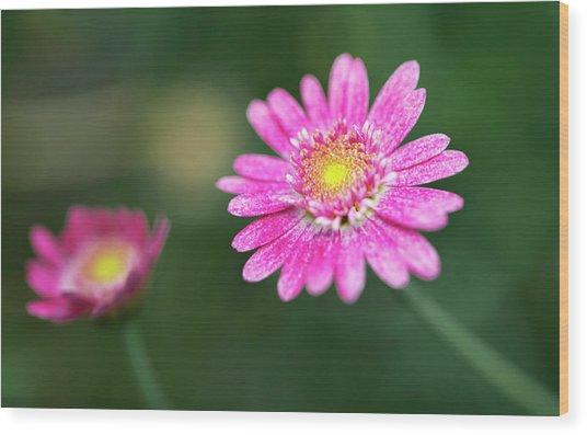 Wood Print featuring the photograph Daisy Flower by Pradeep Raja Prints