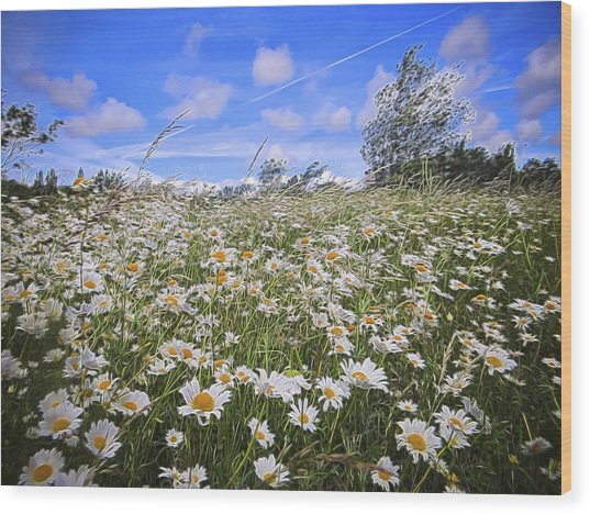 Daisy Heaven Wood Print by Angela Aird