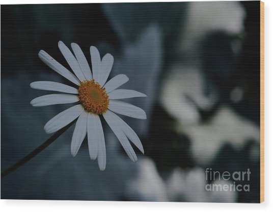Daisy In Gloom Wood Print