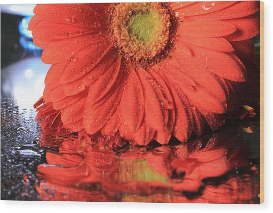Daisy Reflections Wood Print