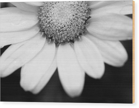 Daisy Smile - Black And White Wood Print