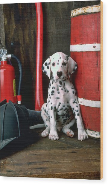 Dalmatian Puppy With Fireman's Helmet  Wood Print