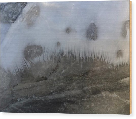 Dalton Deep Sea Fish Toof Wood Print