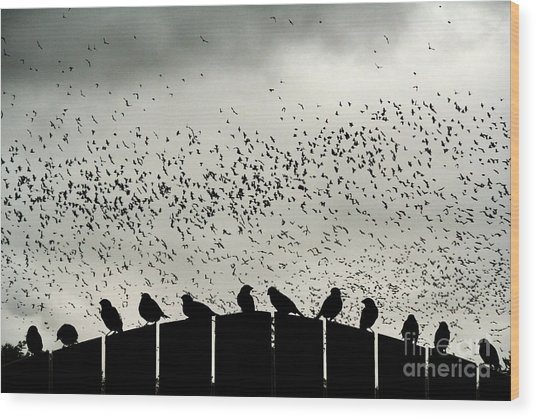Dance Of The Migration Wood Print