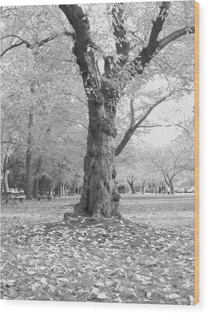 Dance Of The Trees Wood Print