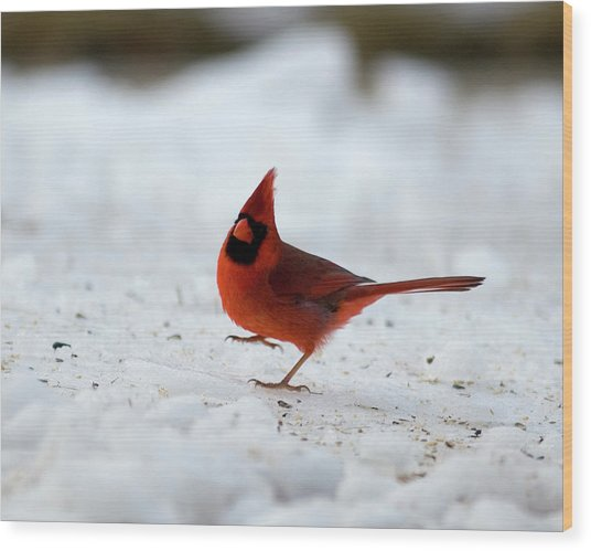 Danceswithcardinals Wood Print
