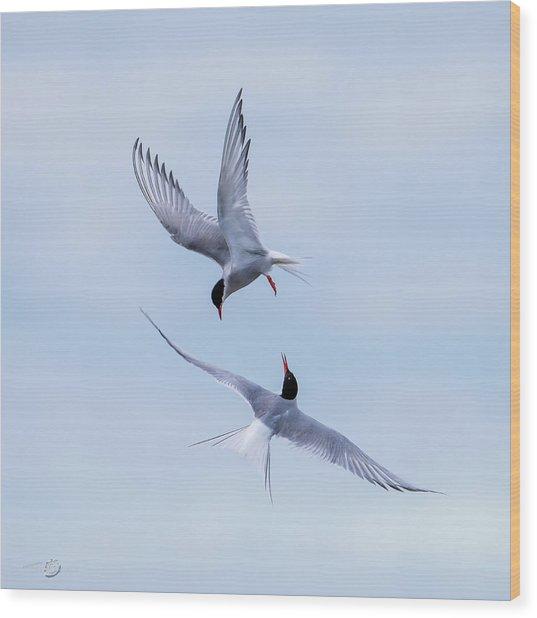 Dancing Arctic Terns Wood Print