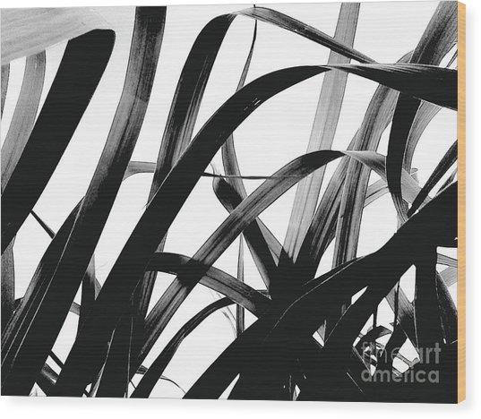 Organic Black Wood Print