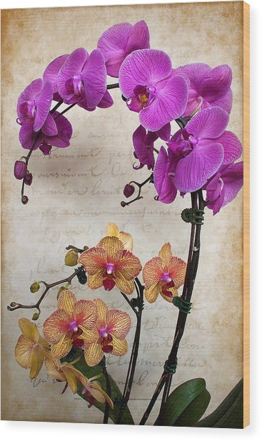 Dancing Orchids Wood Print