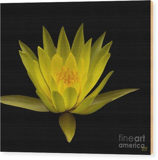 Dancing Yellow Lotus Wood Print