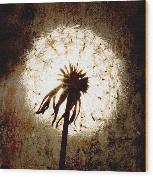 Dandelion Art 5 Wood Print by Falko Follert