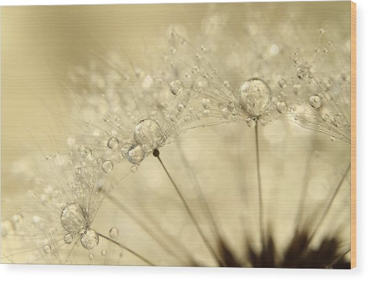 Dandelion Drops Wood Print