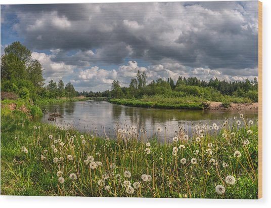 Dandelion Field On The River Bank Wood Print