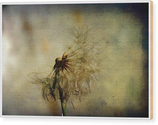 Dandelion Flower Wood Print by Valmir Ribeiro