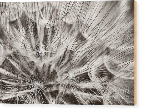 Dandelion Wood Print by Gabriela Insuratelu