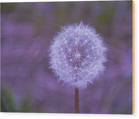 Dandelion Geometry Wood Print