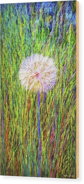 Dandelion In Glory Wood Print