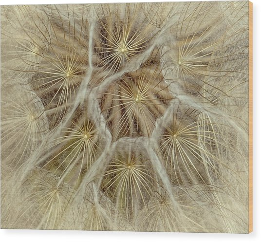 Dandelion Particles Wood Print