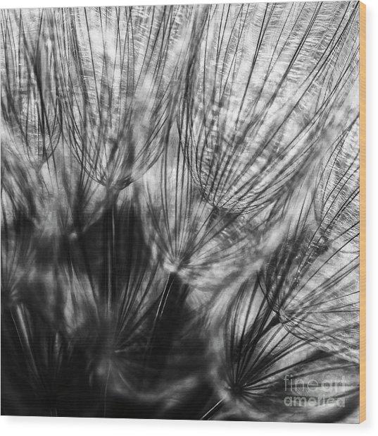Dandelion Seeds I Wood Print