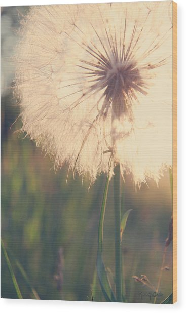 Dandelion Sunshine Wood Print