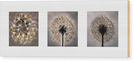 Dandelion Triptych Wood Print