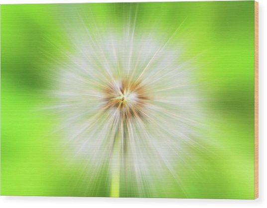 Dandelion Warp Wood Print