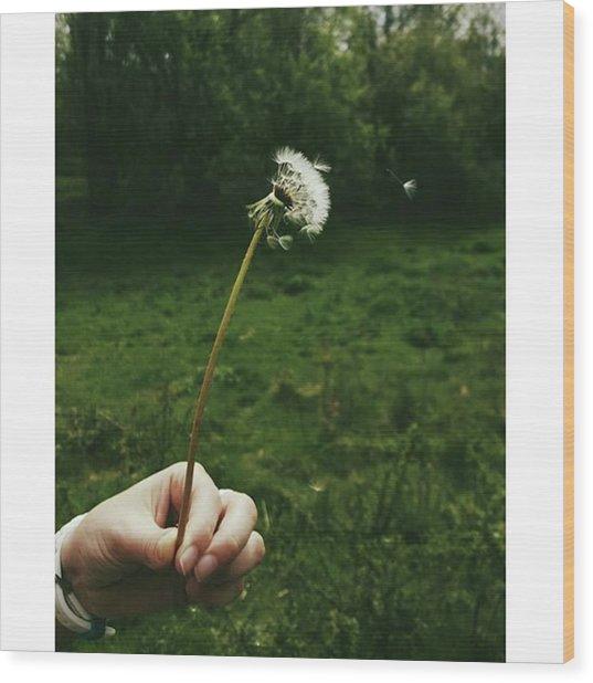 #dandelionclock #dandelion #nature Wood Print by Natalie Anne