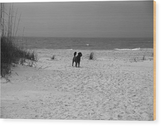 Dandy On The Beach Wood Print