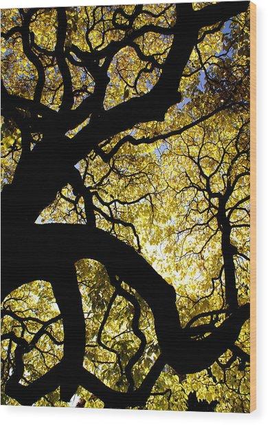 Dangerous Curves Wood Print by Sonja Anderson