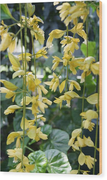 Dangling Yellow Flowers Wood Print by Tina McKay-Brown