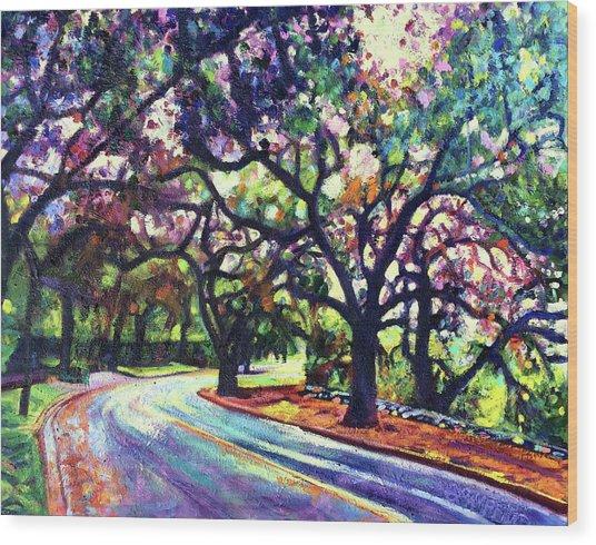Dappled Lane Through The Arroyo Wood Print