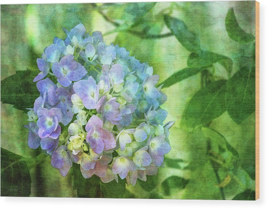 Dappled Light Hydrangea 2300 Idp_2 Wood Print