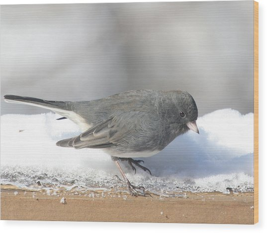 Dark Eyed Junco On The Railing 3 Wood Print by Laurie With