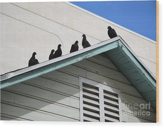 Dark Pigeons Wood Print