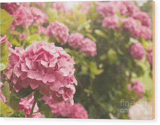 Dark Pink Hydrangea Wood Print