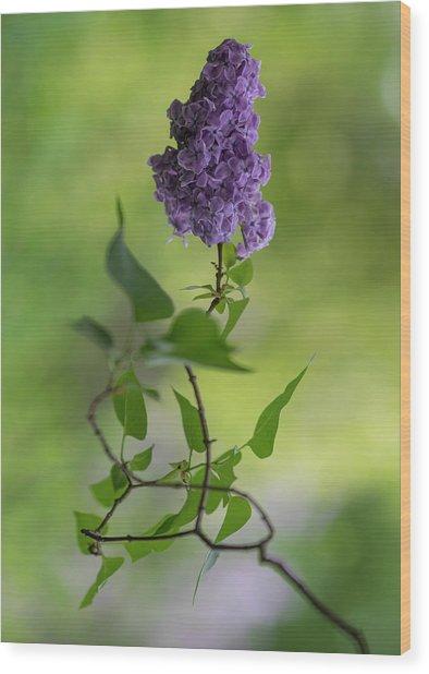 Dark Violet Lilac Wood Print