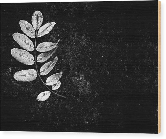 Darkshines Wood Print