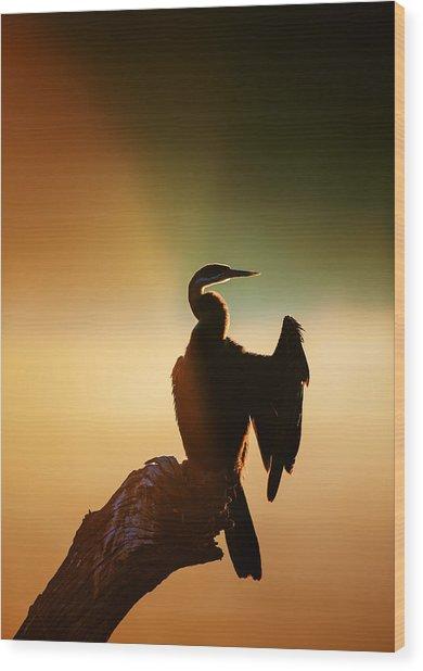 Darter Bird With Misty Sunrise Wood Print