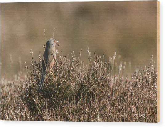 Dartford Warbler Wood Print