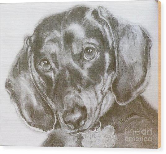 Daschund Pencil Drawing Wood Print