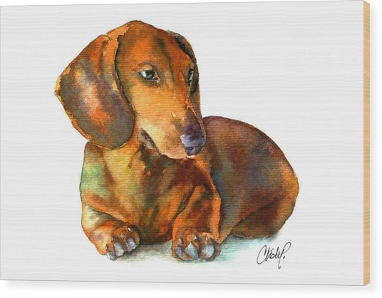 Daschund Puppy Dog Wood Print