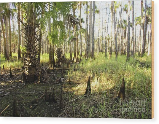 Dawn In The Florida Forest Wood Print by Matt Tilghman
