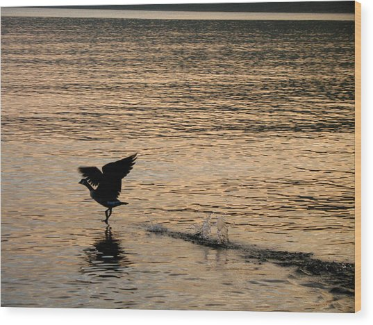 Dawn's First Flight Wood Print by Cathy Weaver