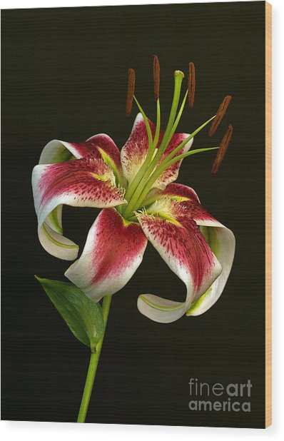 Day Lily Majesty Wood Print