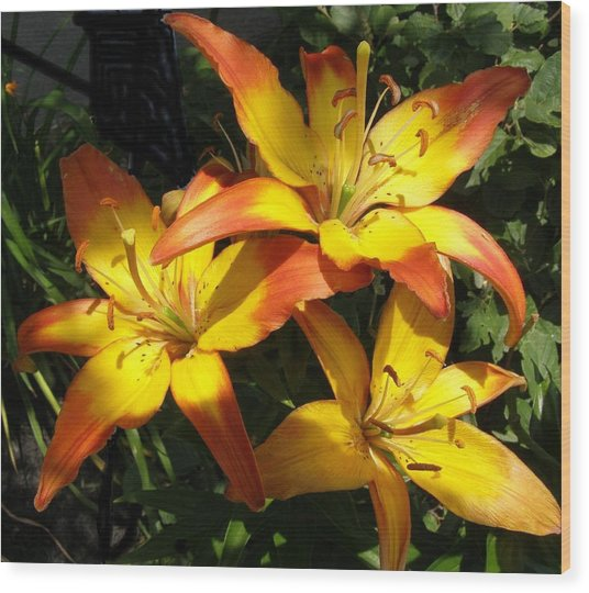 Daylilies Dressed In Their Best Wood Print by Jeanette Oberholtzer